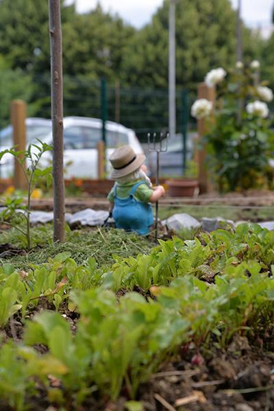 nain de jardin dans les jardins familiaux de Marly-le-Roi